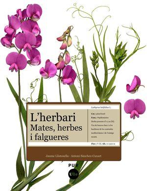 L'HERBARI: MATES, HERBES I FALGUERES